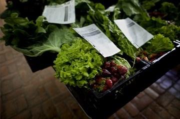 """Projecto de pequenos produtores. Vender """"online"""" e entregar em mãos para aproximar a agricultura ao consumidor"""